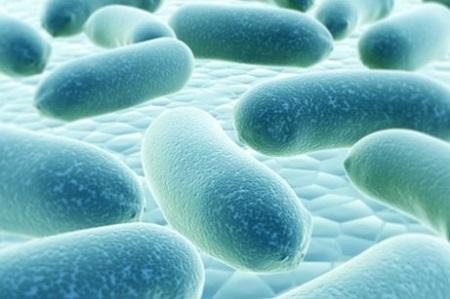 lich-su-loi-khuan lịch sử lợi khuẩn