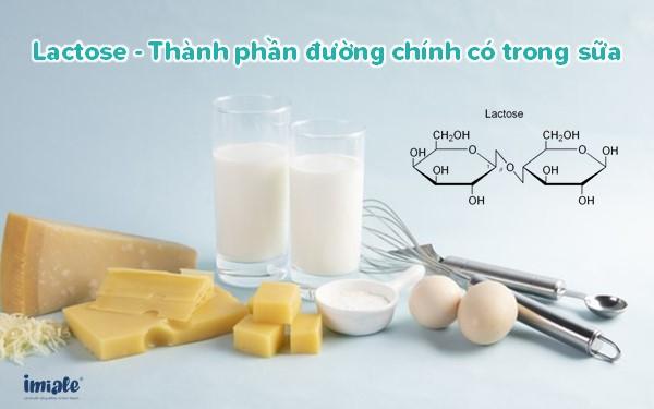 Lactose - đường có trong sữa