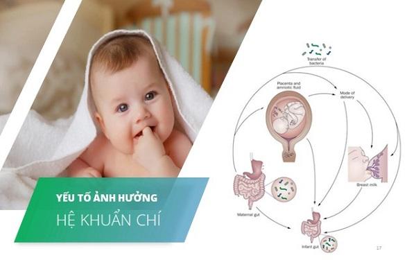 1.2. Những yếu tố tác động tới sự hình thành hệ khuẩn chí đường ruột của trẻ sơ sinh và trẻ nhỏ 1