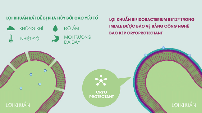 Công nghệ cryoprotectant trong Imiale