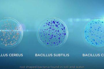 bacilus clausii