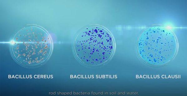 2. Tại sao lại cần sản xuất bào tử lợi khuẩn ? Bào tử lợi khuẩn có tốt không ? 1