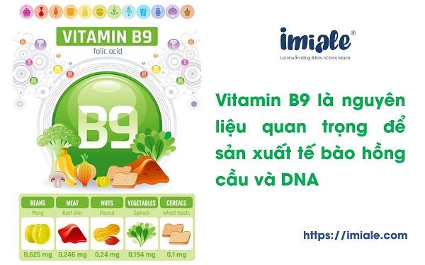 1.7. Vitamin B9 (Acid folic) 1