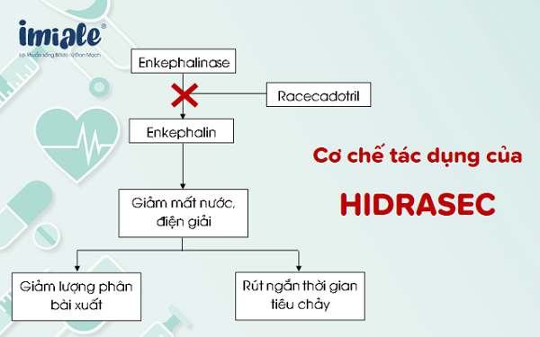 cơ chế tác dụng của Hidrasec