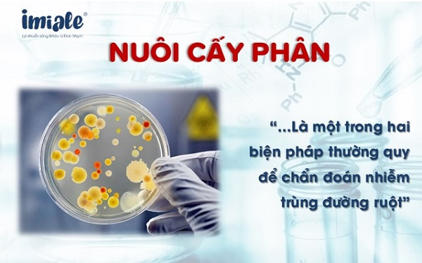 nuôi cấy phân để chẩn đoán nhiễm trùng đường ruột