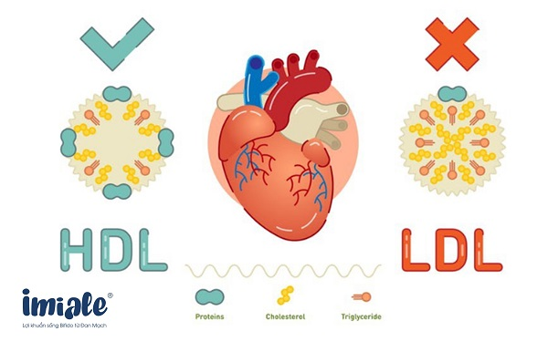 4.6. Điều hòa Cholesterol máu 1