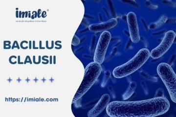[Tổng quan] Bào tử lợi khuẩn Bacillus clausii & Vai trò