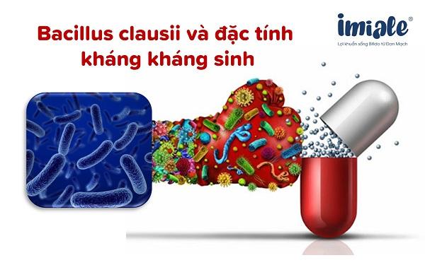 Bacillus clausii và đặc tính kháng kháng sinh