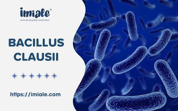 [Tổng quan] Bào tử lợi khuẩn Bacillus clausii & Vai trò 1