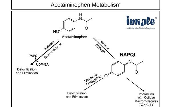 cơ chế tác dụng paracetamol