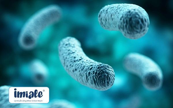 2. Tổng quan về danh pháp (tên khoa học) của Probiotics 4